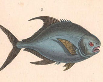 Fish - Antique French 19th century natural history engraving with hand-colouring, circa 1825