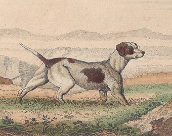 Le Chien braque and Le Dogue (Pointer and Mastiff) - Antique French natural history engraving, c1835
