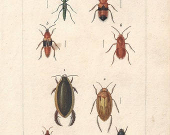 Beetles, original antique French natural history engraving, 1823