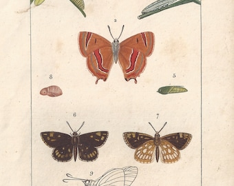Butterflies, original antique French natural history engraving, 1823