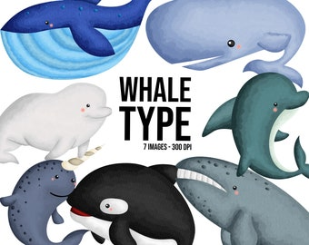 Watercolor Whale Type Clipart - Cute Animal - Fish Clipart