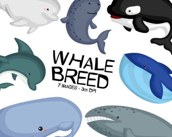Whale Breeds Clipart - Cute Whale Clip Art - Fish and Sea Creatures - Free SVG on Request