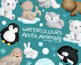 Watercolor Arctic Animal Clipart - Cute Animal - Arctic Clipart