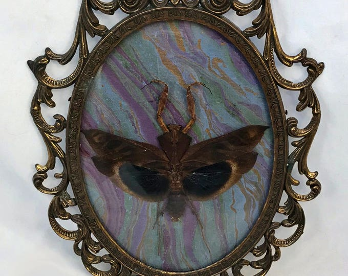 Large Bark Mantis Antique Frame