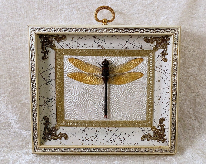 Dragonfly - Vintage Frame - Textured White Floral: Oddities Curiosities Gothic Macabre Entomology Insect Art Taxidermy Witchy Nature Decor