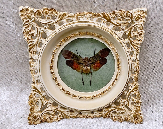 Colorful Planthopper - Vintage Frame - Distressed Teal: Oddities Curiosities Gothic Macabre Entomology Insect Art Taxidermy