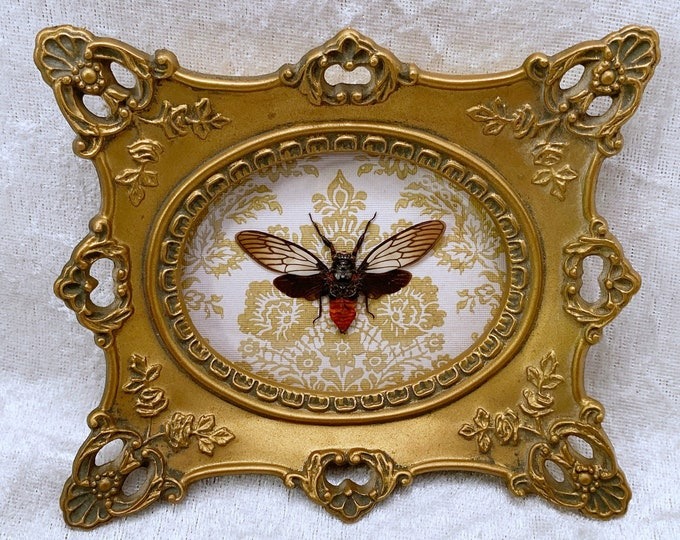 Small Red-Devil Cicada - Vintage Frame - Yellow/Green Floral: Oddities Curiosities Gothic Macabre Entomology Insect Art Taxidermy Witchy