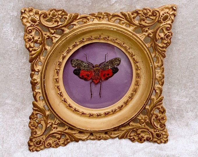 Red/Gray Planthopper - Vintage Frame - Lavender Velvet: Oddities Curiosities Gothic Macabre Entomology Insect Art Taxidermy