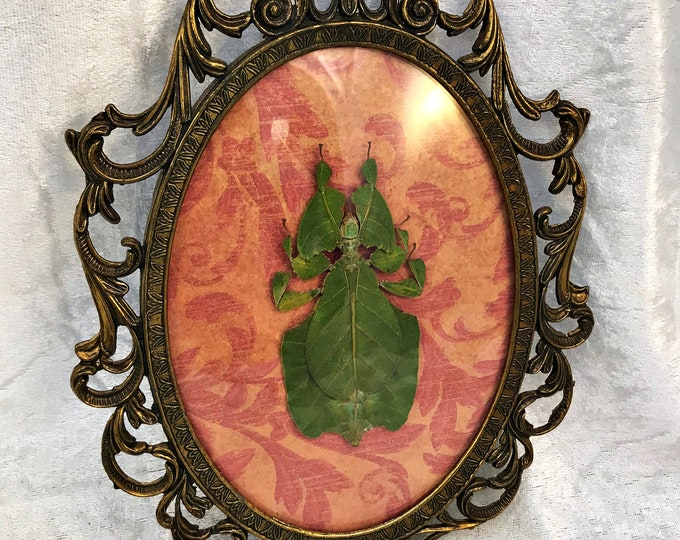 Leaf Insect Antique Frame