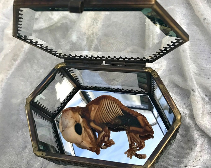 Fetal Pig - Glass Display Case