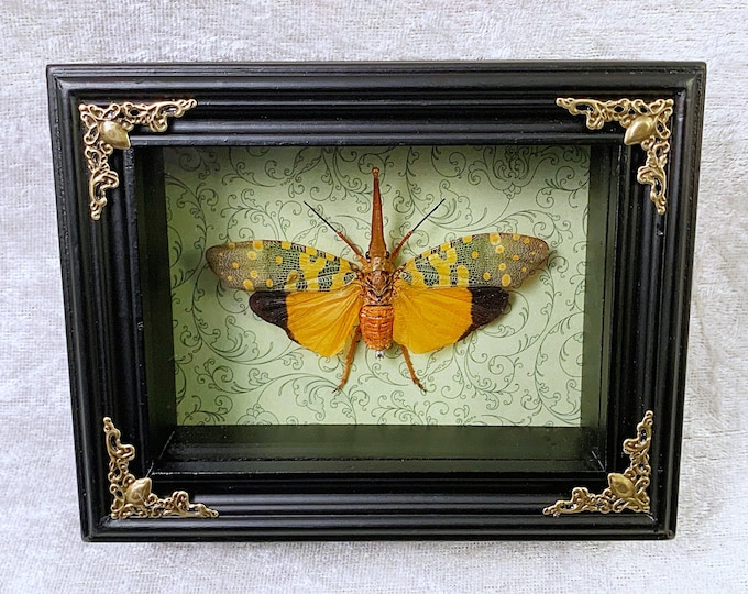 Yellow Lanternfly - Green Botanical Scrolls: Oddities Curiosities Gothic Macabre Entomology Insect Art Taxidermy