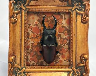 Metallic Marble Stag Beetle