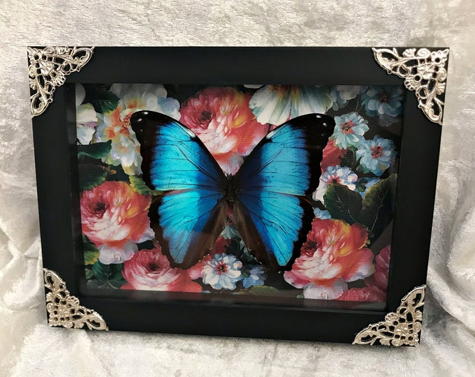 Achilles Butterfly