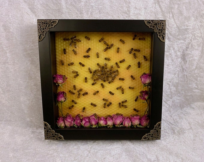 Honey Bee Hive - Black Shadowbox with Pink Roses