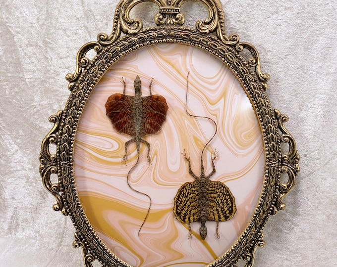 Flying Dragon Lizard Duo - Antique Frame - Gold Marble: Oddities Curiosities Gothic Macabre Taxidermy Witchy Nature Unusual Decor