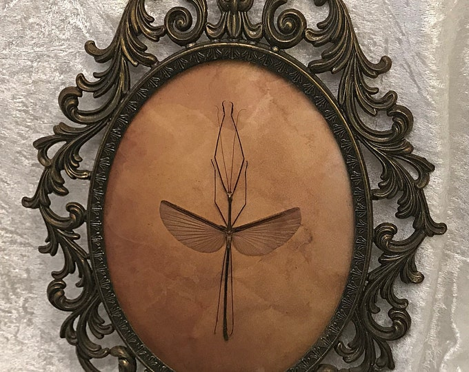 Large Winged Stick Insect Antique Frame
