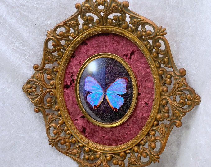 Moonstone Morpho Butterfly - Antique Frame - Plum Velvet Black Glitter: Oddities Curiosities Gothic Macabre Entomology Insect Art Taxidermy