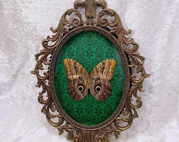 Owl Butterfly - Antique Frame - Green Ornate: Oddities Curiosities Gothic Macabre Entomology Insect Art Taxidermy Witchy Nature Decor Boho