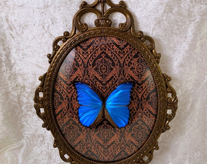 Giant Blue Morpho Butterfly - Antique Frame - Rose Gold Damask: Oddities Curiosities Gothic Macabre Entomology Lepidoptera Insect Taxidermy