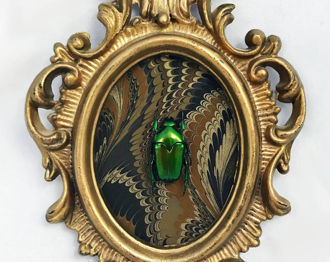Gold Marbled Green Flower Beetle