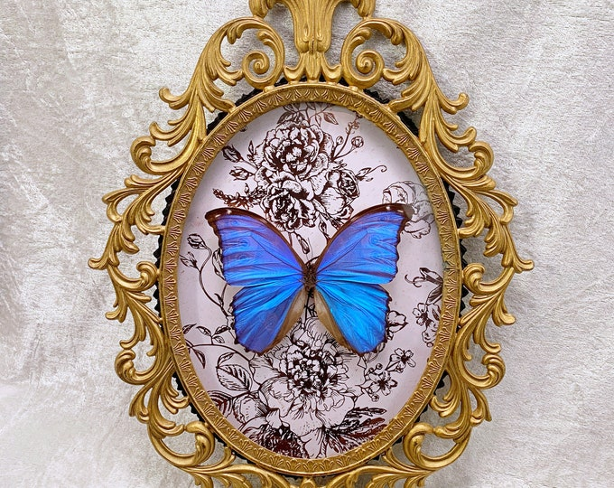 Giant Blue Morpho Butterfly - Antique Frame - Rose Gold Floral: Oddities Curiosities Gothic Macabre Entomology Lepidoptera Insect Taxidermy