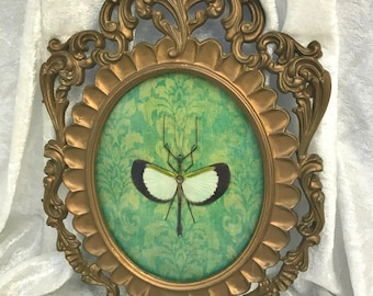 ON HOLD - Payment Pending, Reserved for Misha: Stick Insect Vintage Frame
