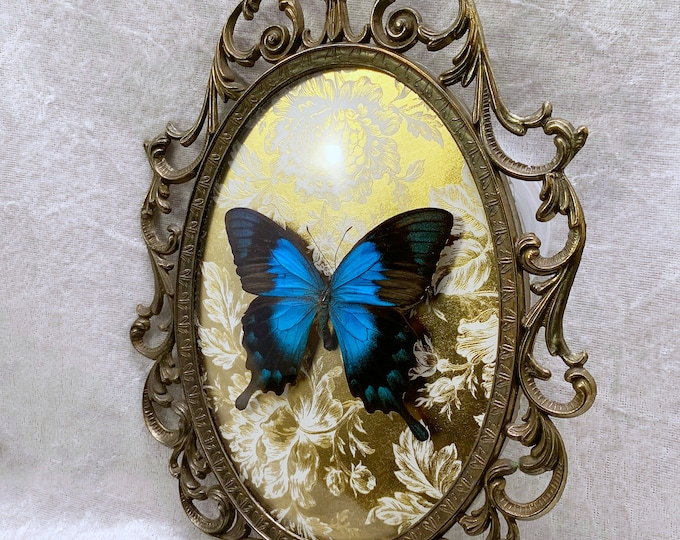 Sea Green Swallowtail - Antique Frame - Metallic Gold Floral: Oddities Curiosities Gothic Macabre Entomology Insect Taxidermy Witchy Decor