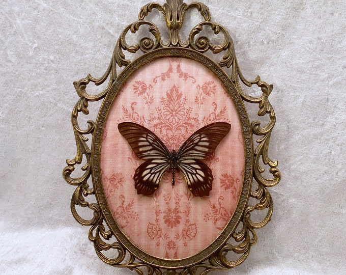 Zebra Stripe Butterfly - Antique Frame - Burgundy Wallpaper: Oddities Curiosities Gothic Macabre Entomology Insect Art Taxidermy Witch Decor