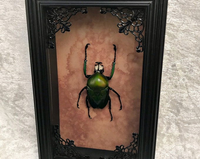 Green Flower Beetle