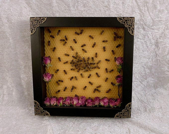 Honey Bee Hive - Black Shadowbox with Pink Roses: Oddities Curiosities Gothic Macabre Entomology