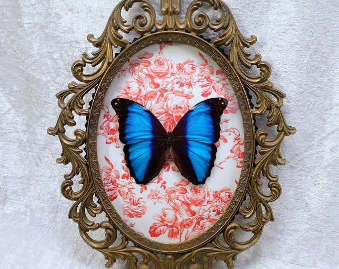 Achilles Butterfly - Antique Frame - Magenta Floral: Oddities Curiosities Gothic Macabre Entomology Insect Lepidoptera Witchy Nature Decor