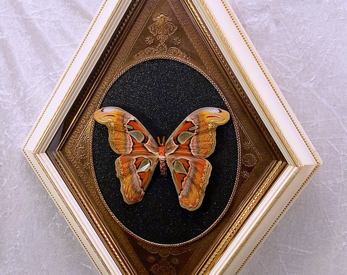 Atlas Moth - Extra Large Vintage Diamond Frame - Black Glitter: Oddities Curiosities Gothic Macabre Entomology Insect Art Taxidermy Witchy