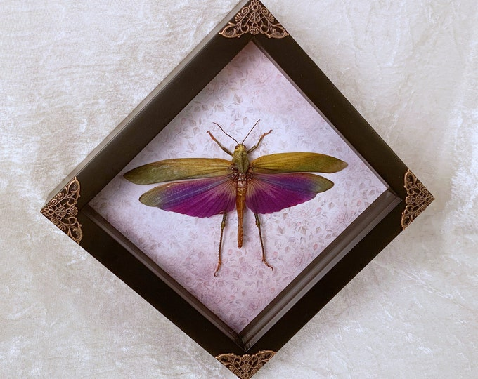 Giant Violet Grasshopper - Light Gray/Violet Floral: Oddities Curiosities Gothic Macabre Entomology Insect Art Taxidermy