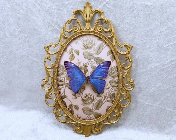 Blue Morpho Butterfly - Antique Frame - Metallic Gold Roses: Oddities Curiosities Gothic Macabre Entomology Insect Taxidermy Witchy Decor