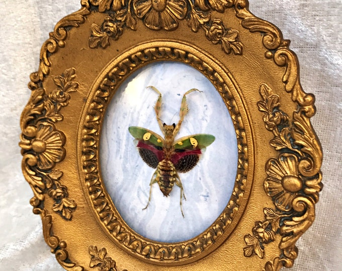 Flower Mantis Antique Frame