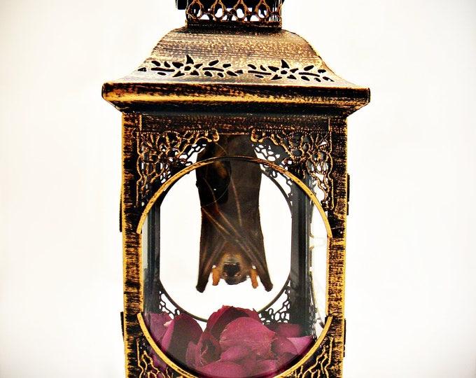 Hanging Bat Taxidermy Lantern (PINK)