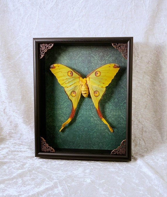 Holographic Rainbow Sunset Moth Antique Frame Insects Home ...