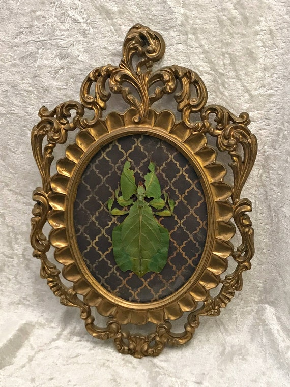 Framed Leaf Insect - Gold Victorian Pattern