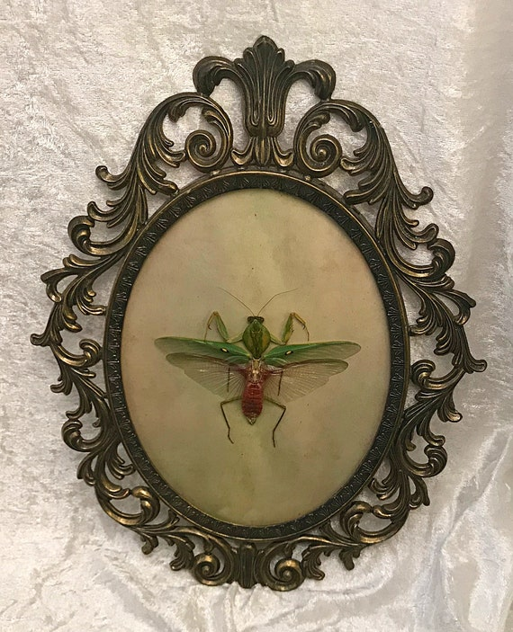 Giant Praying Mantis Antique Frame