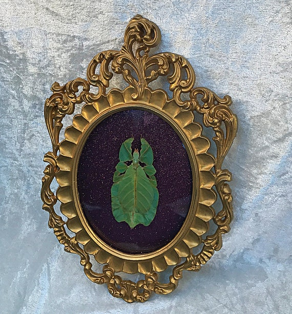 Framed Leaf Insect - Purple Glitter