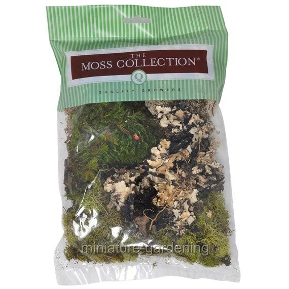 Reindeer Moss Fairy Garden Assorted-2 oz for Miniature Garden