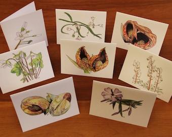 Ohio Wildflower Notecards