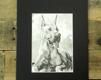 1950's Black and White Great Dane Print. Awesome Great Dane Illustration - Perfect Gift for a Great Dane Owner. 8 x 10 print, ready to frame