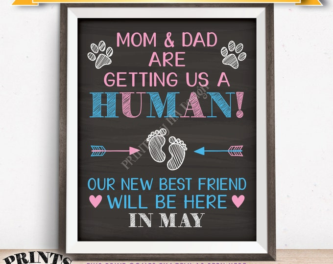 Pets Pregnancy Announcement Sign, Mom & Dad are Getting Us a Human in MAY Dated Chalkboard Style PRINTABLE Baby Reveal for Dogs/Cats <ID>