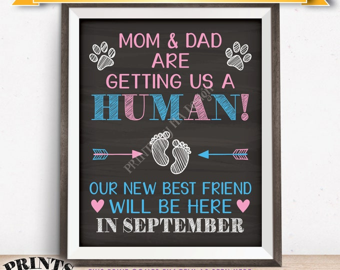 Pets Pregnancy Announcement Sign, Mom & Dad are Getting Us a Human in SEPTEMBER Dated Chalkboard Style PRINTABLE Reveal for Dogs/Cats <ID>