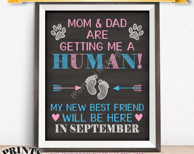 Pet Pregnancy Announcement Sign, Mom & Dad are Getting Me a Human in SEPTEMBER Dated Chalkboard Style PRINTABLE Reveal for a Dog/Cat <ID>