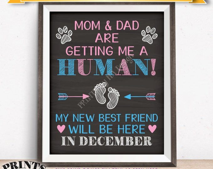 Pet Pregnancy Announcement Sign Mom & Dad are Getting Me a Human in DECEMBER Dated Chalkboard Style PRINTABLE Baby Reveal for a Dog/Cat <ID>