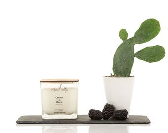 Cactus and blackberry, soy candle