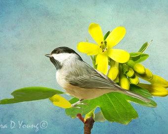 Carolina Chickadee Bird, Chickadee Bird Photo, Bird Photography, Bird Wall Art, Golden Currant, Fine Art Photography, Songbird Art Print