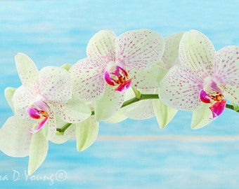 White Orchids, Orchid Art Print, White and Red, Pastel Blue, Orchid Flower, Mothers Day, Gift for Her, Flower Wall Art, Fine Art Photography